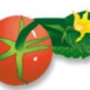 Illustration vectorielle Champlat
